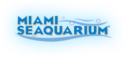 Miami Seaquarium checkered blue letters and bubbles logo